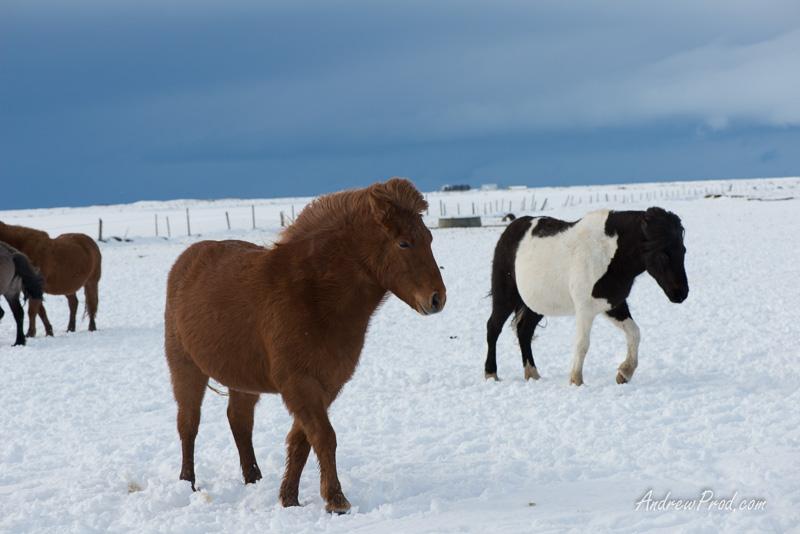 Travel Photographer Iceland-18