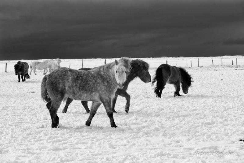 Travel Photographer Iceland-19