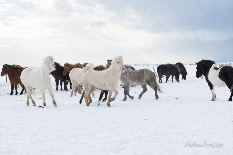 Travel Photographer Iceland-22