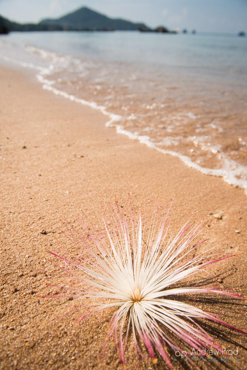 beach_photography